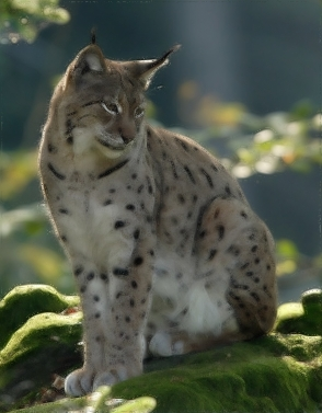 Mascotte Lucid Lynx